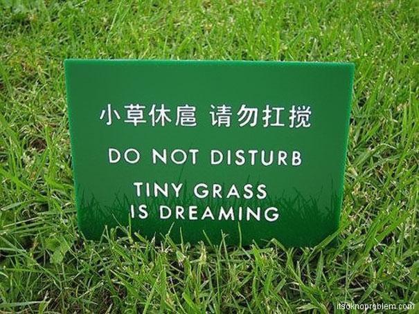请勿打扰. 小草是在做梦