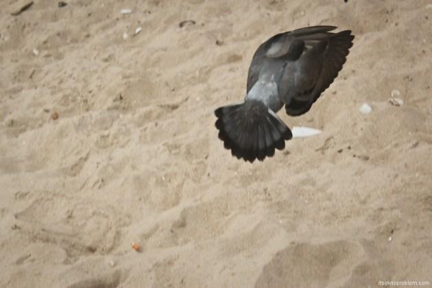 Найди гиббона в Ча-Аме. Голуби делают селфи на пляже