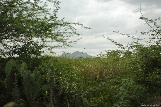Найди гиббона в Ча-Аме. Лесной парк