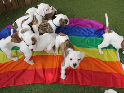 Pride Cymru Dog show