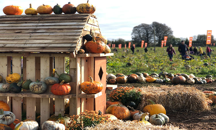 The PYO Pumpkin patch is back this year!