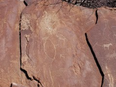 Twyfelfontein-Jock etching of penguin and other animals