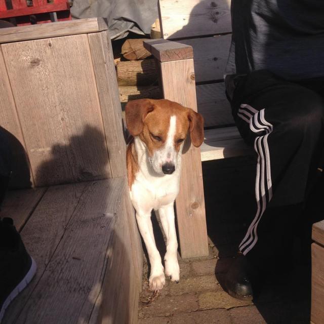 Kaj zat vast hond buiten zon vast