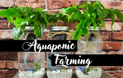 Aquaponic Farming When Will the First Plants Be Ready