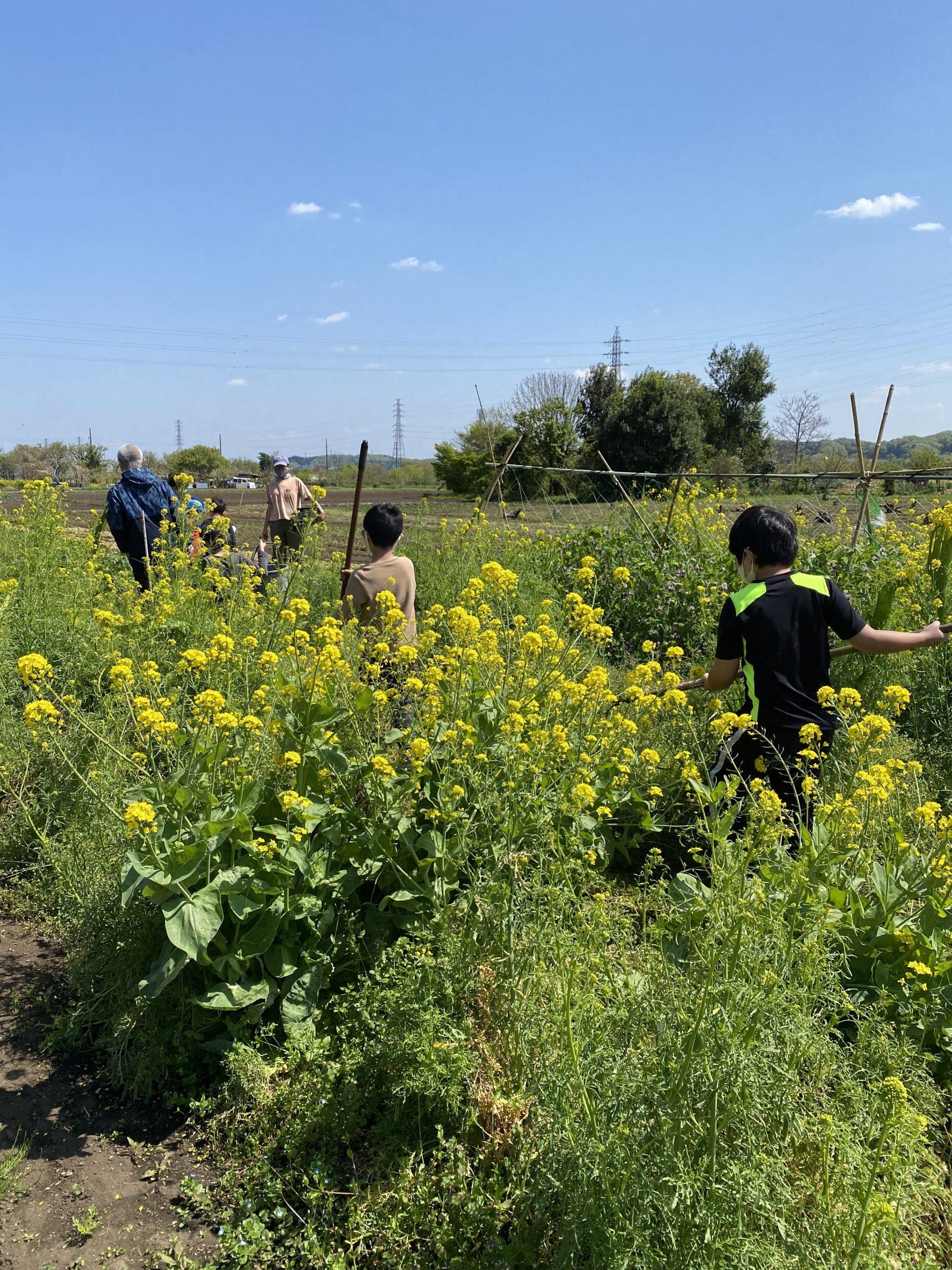 農園で遊ぼ!春の農作業体験2021 体験レポート