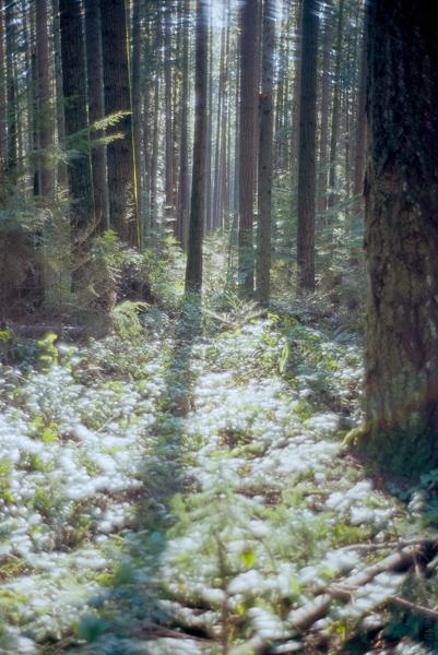 ITSUMO_Endowment Lands_Light in the Woods_Spring_Slider_2020-03