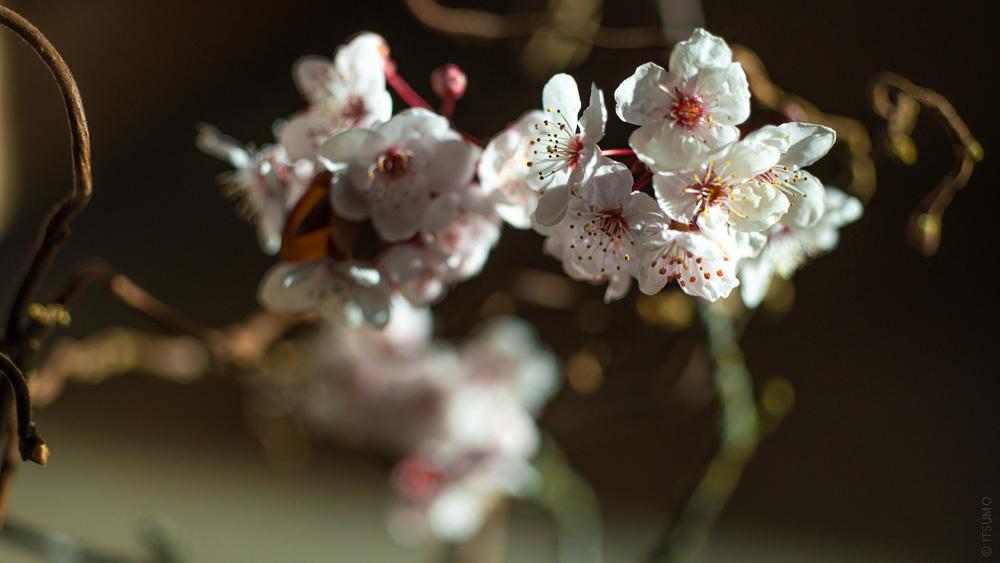 ITSUMO_Plum flower_Spring_Slider_2020-03