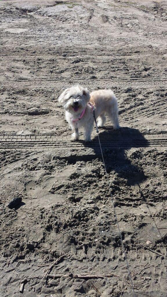 Goldie beach