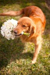 Apollo Beach Wedding Photographer on Wordpress2
