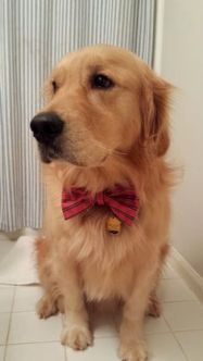 Dog groomsman