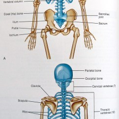 Axial Skeleton Skull Diagram Software To Create Network Notes On Anatomy And Physiology Using Imagery Relax