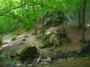 Les bois et les forêts