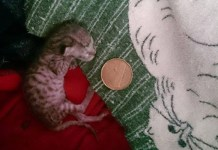 kitten who lived