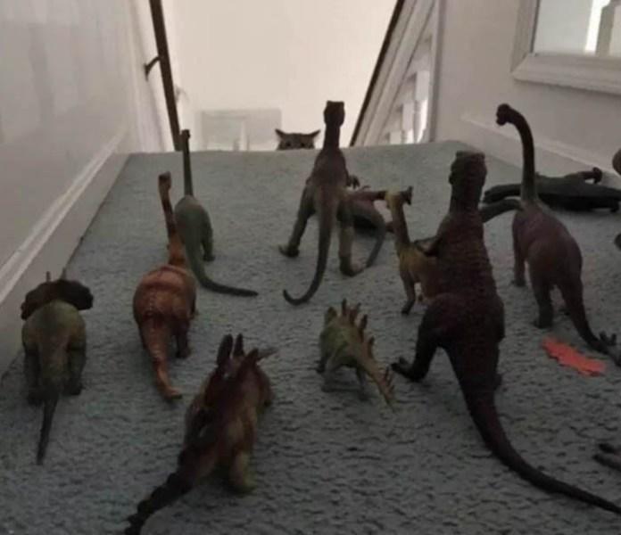 jerk cats