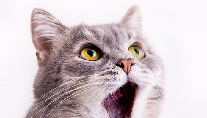 do cats fart the truth about feline flatulance feat