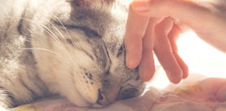 painful losing a cat