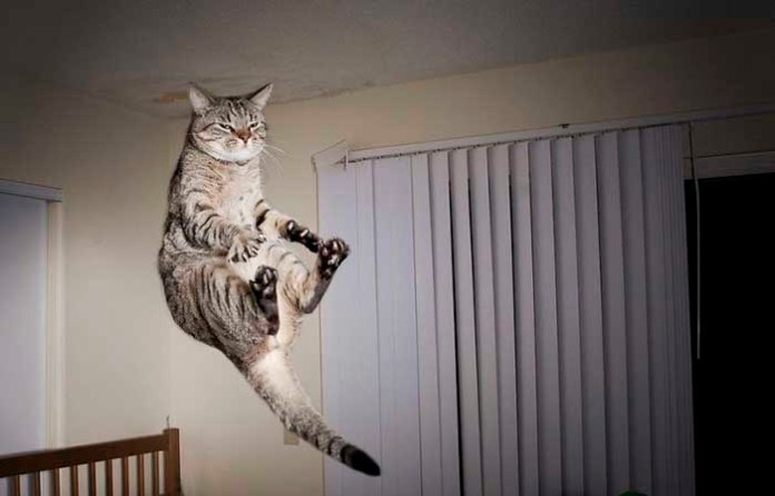 cat touches its toes leap day
