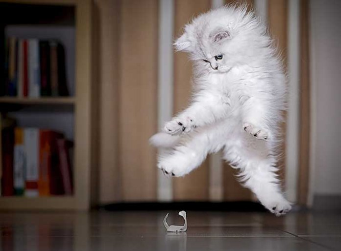 white kitten goes poof over a piece of paper leap day