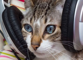 cat listening to music on headphones