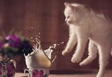kitten and milk leap day