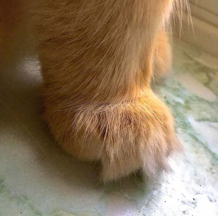 Reddit orange kitty cankles