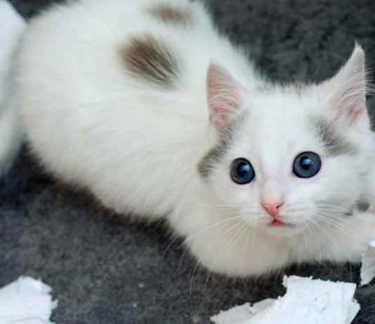 a kitten tears through toilet paper