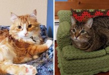 two cats lay on crochet cat couches made by their owners