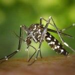 ワタシは蚊。遺伝子を未来へつなぐため命をかけて血を吸うの