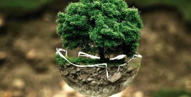 La-ONU-reconoce-el-Programa-Carbon-Zero-de-Toshiba-Tec