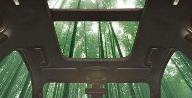 Ford-investiga-el-uso-del-bambú