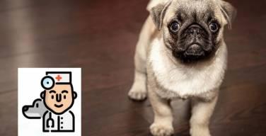 Club-WUF-la-App-para-los-perros-sin-hogar