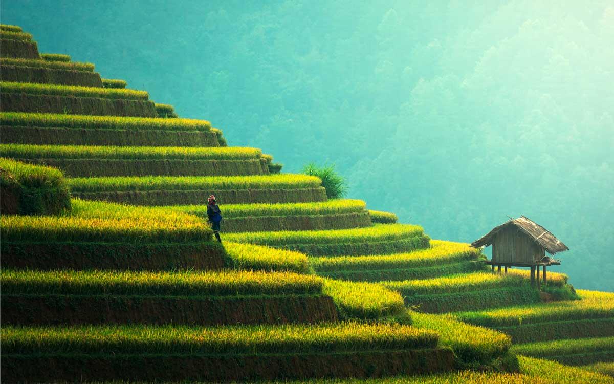 agricultura-eficiente-en-america-latina-a-traves-de-la-tecnologia