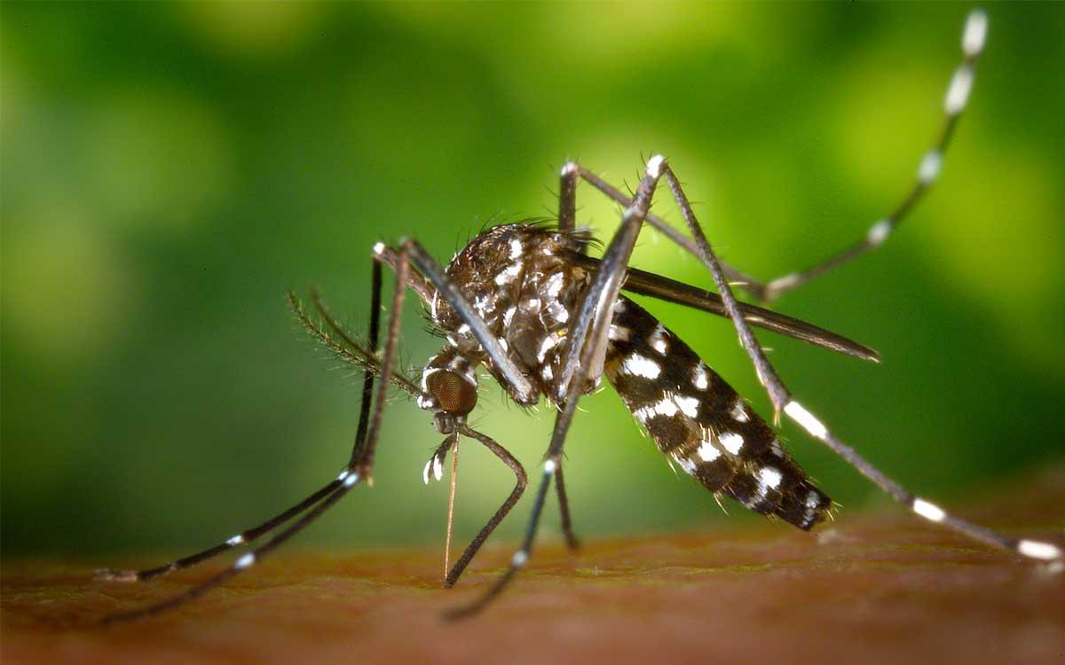 uoc-desarrolla-una-tecnologia-para-identificar-mosquitos-tigre