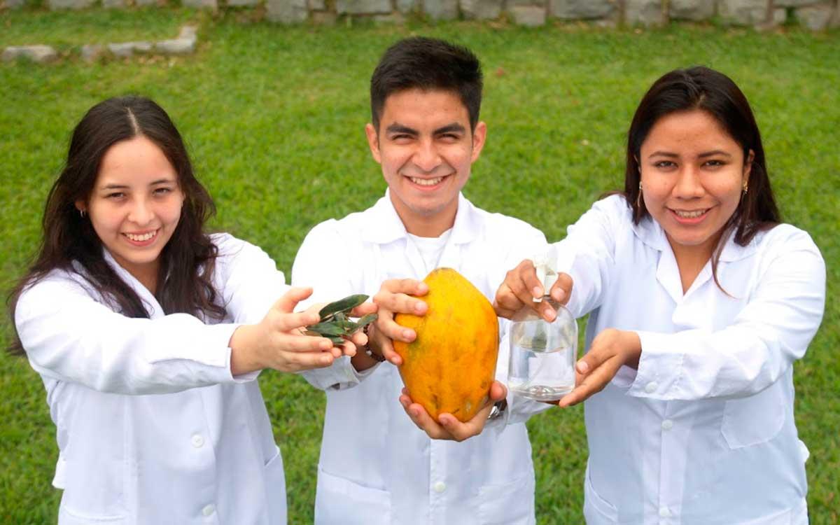 investigan-un-fungicida-natural-con-hojas-de-papaya