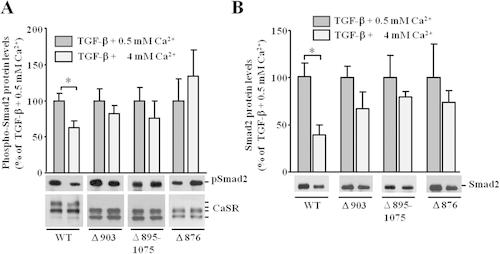 Calcium‐sensing receptor inhibits TGF‐β‐signaling by