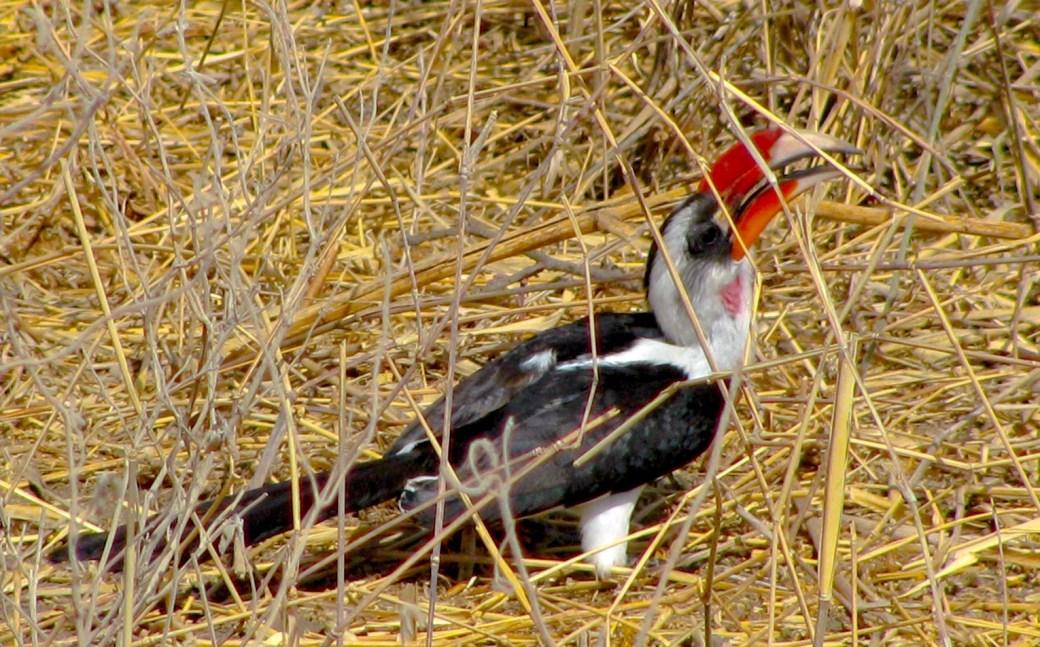Tarangire National Park, Tanzania_NJ Cordeiro