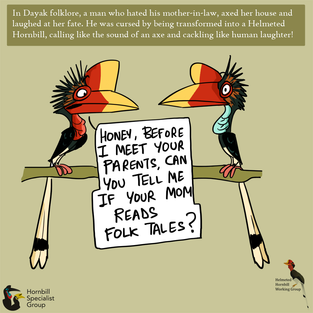 helmeted hornbill cartoons_web 3