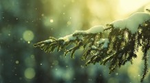 snowy-tree-bokeh_fullhdwpp.com_