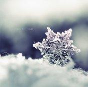 the_winter_dream_by_nnikoo-d4n98p9