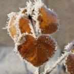 winter_love__by_quaddie-d38kbwu