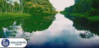 5 estudios sobre Amazonía que nos dejó el 2020