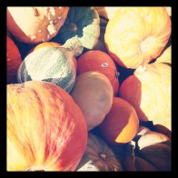 """""""Pumpkins Galore""""- Submitted by Glenna Read"""