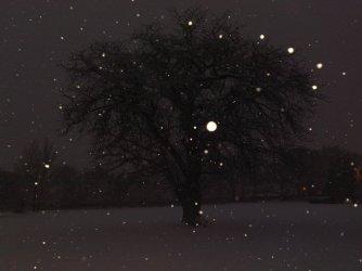 snow-Dec 2010d