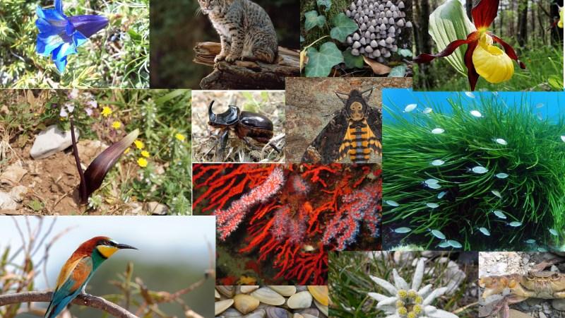 Che cos'è la biodiversità?