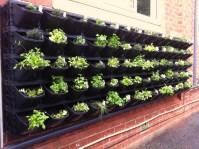 Urban Gardening | Ivan Estrada Properties