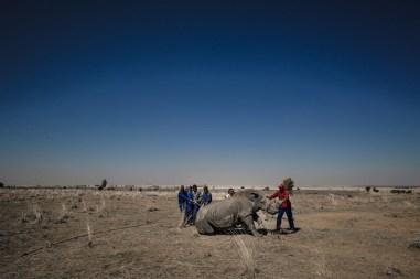 Jornada do Rinoceronte