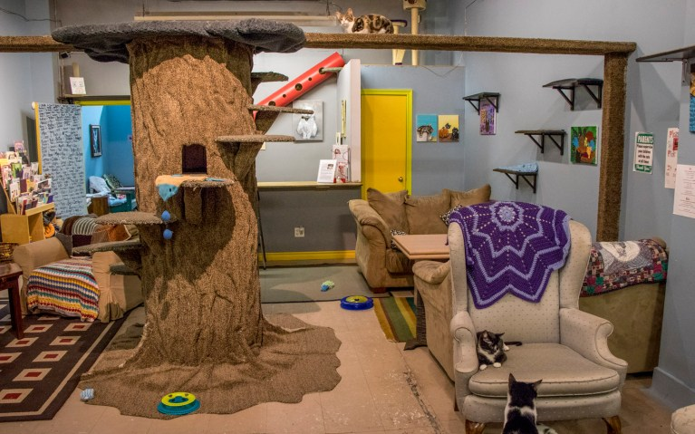 Image result for My Kitty Cafe, Guelph Ontario