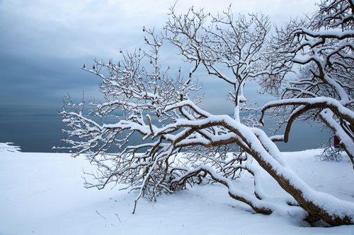 Norwegian winter fjord landscape with tree