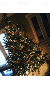 """Wonky the Tree"""
