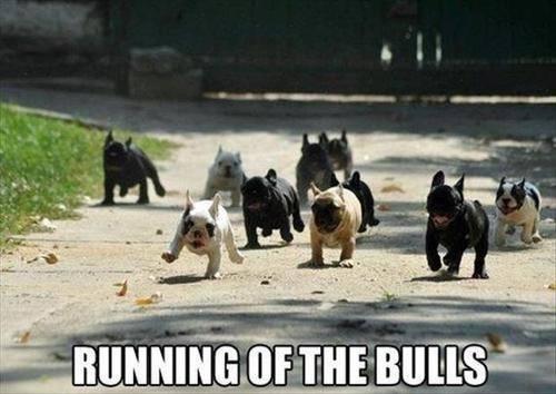 bulldog meme